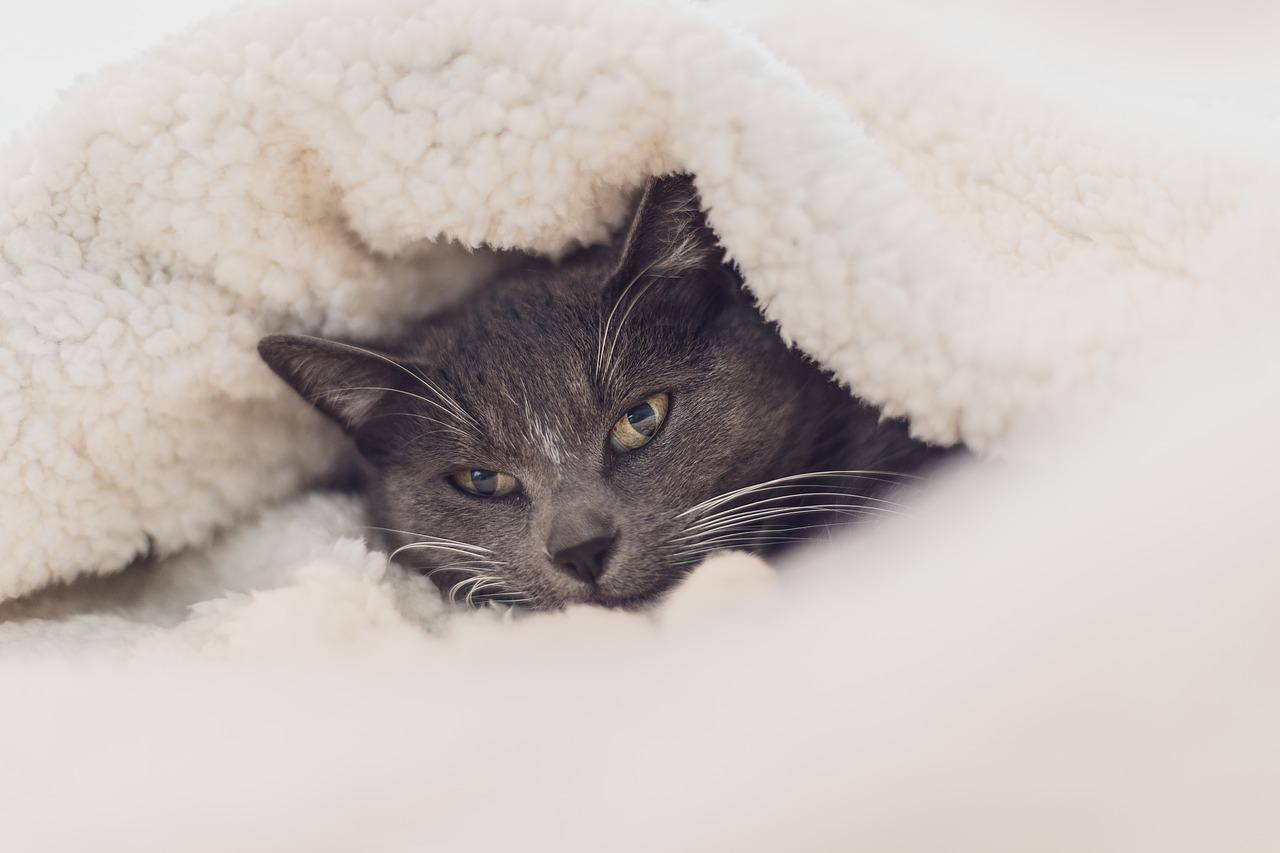 毛布 洗濯 ほこり