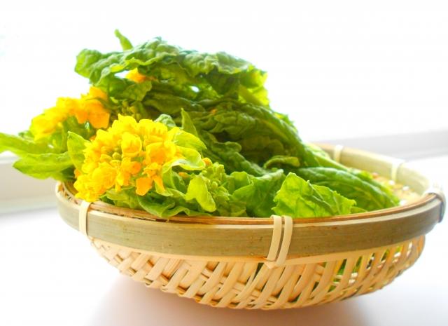 春野菜に関するギモン一覧まとめ